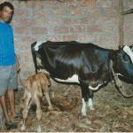 Maurice und seine neue Kuh